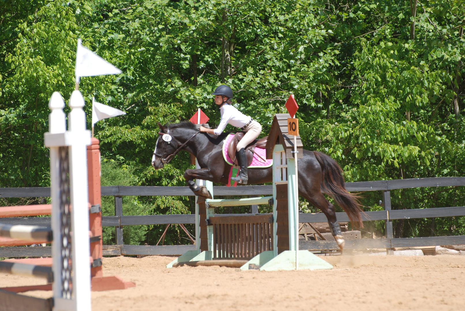 show-jumping-image